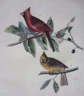 AUDUBON BIRD OF AMERICA OCTAVO LITHOGRAPH