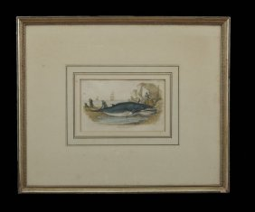 Five British Hand-Colored Engravings Of Whales