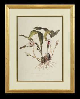 Pair Of Decorative Botanical Prints
