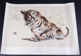 Ralph Thompson Print Tiger Cub & Bee