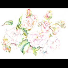 "Sally Robertson ""Hybrid Musk Rose"" Watercolor"