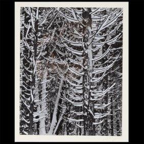 "Ansel Adams ""forest Detail - Winter"" Gelatin Silver"