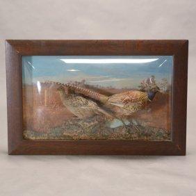 Framed Diorama Shadow Box With Two Taxidermy Pheasants
