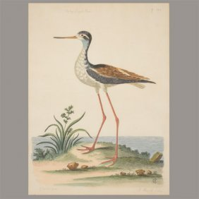 """Peter Mazell """"the Long Legged Plover"""" Lithograph."""