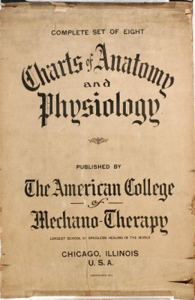A Vintage Anatomical Chart By The Amercian College