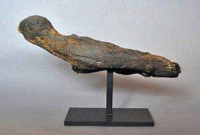 An Egyptian Mummifed Hawk