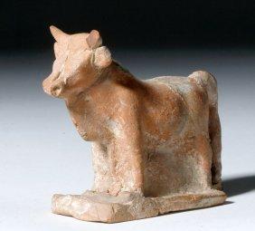 Handsome Greek Boeotian Terracotta Votive Bull