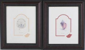 TWO FRAMED PRINTS CONCH & SAND DOLLAR
