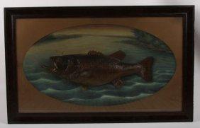 Herman Grieb Taxidermy 1920 Fish Diorama