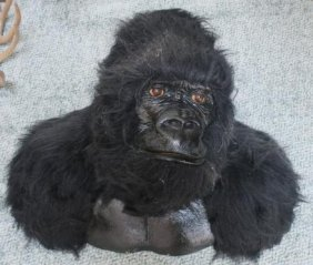 Life Mask Of African Gorilla (gorilla Gorilla):