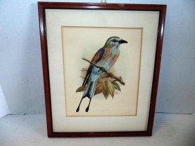 Lithograph Of Bird