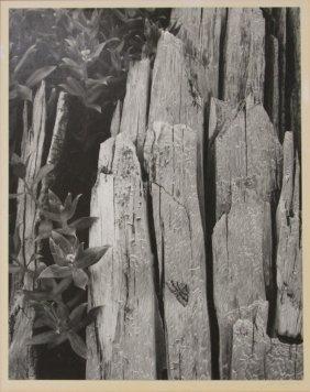 Ansel Adams, Glacier Bay National, Pen Signed