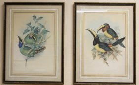 Lot Of (2) 19th Century Colored Lithographs, Gould