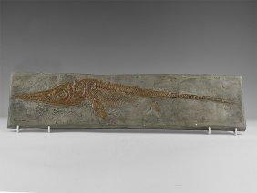Natural History - Ichthyosaur Museum Replica