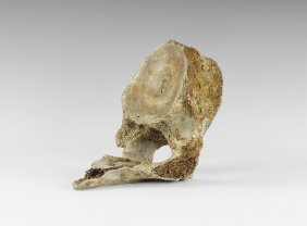 Natural History - Woolly Mammoth Vertebra