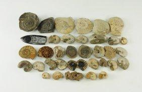 Natural History - Mixed Fossil Group
