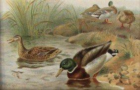 "P.J. Smit Chromolithograph ""Wild Duck"""