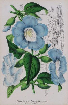 L. Stroebant 19th Century Hand Colored Botanical Lithog
