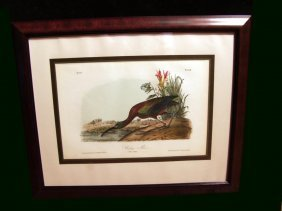 Audubon Lithograph Of The Glossy Ibis