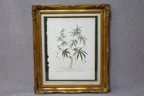 Copper Plate Engraving Of Cannabis Plant