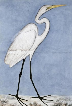 "LUCKNOW SCHOOL  ""GREAT EGRET"""
