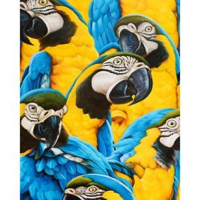 Wild Parrots Gallery Wrap