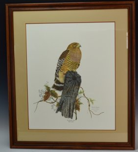 Frank Reisiger Red Shouldered Hawk Signed Print