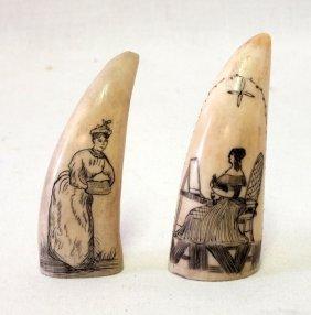 Pair Of Scrimshaw Teeth