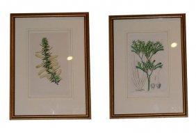 C. 1848 Framed Botanicals