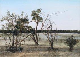Marie Barr Galahs, Boree Trees