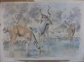 Patricia Vaughan Watercolor Kudu In Africa