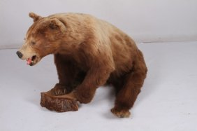 Full Body Brown Bear Taxidermy Mount