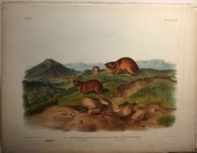 Audubon, 2 Lemming Species, Folio Edition.