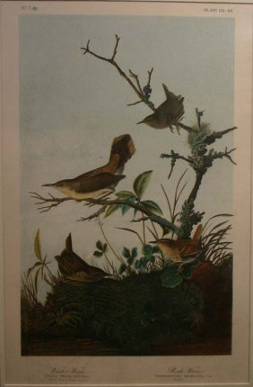 Audubon, ''Winter Wren/ Rock Wren,'' Folio Edition.