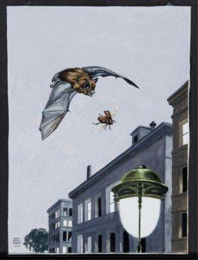 Jacob Bates Abbott Gouache On Paper Of Bat And Fly