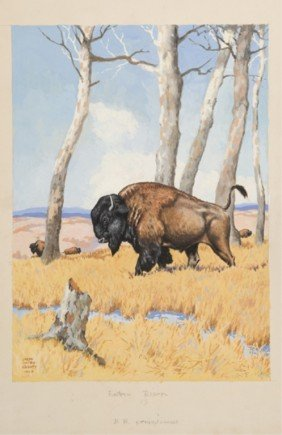 Jacob Bates Abbott Eastern Bison In A Field.