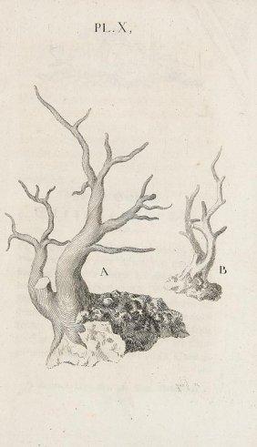 Roques De Maumont, J. E Von Den Seepolypengehäusen.