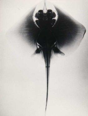Koch, Fred Sammlung Von 6 Photographien. 1920er/1950er.