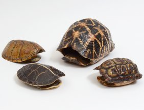 Group Of Four 19th C. Tortoise Shells