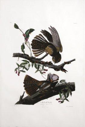John James Audubon, Plate 52:
