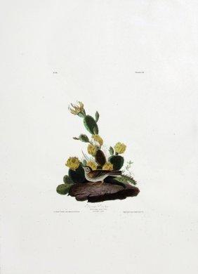 John James Audubon, Plate  94: