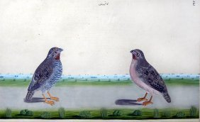 Pair Of Jungle Bush-quail (perdicula Asiatica)
