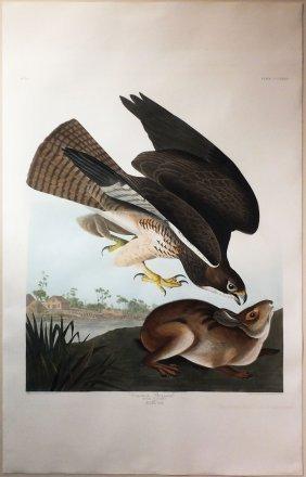 Audubon Aquatint By Havell, Common Buzzard