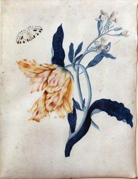 Mid-18th Century Dutch Botanical Watercolor