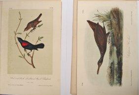 2 Audubon Octavo Bird Original Prints