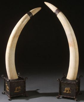 A Pair Of Old Sport Tropy Elephant Tusks, C 1915