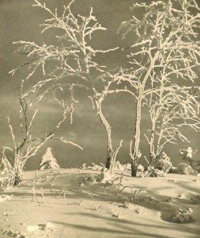 Banse, Ernst - Winter Wonderland