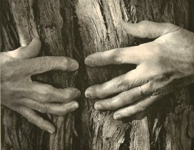 Bullock, Wynn - Tree Hugger