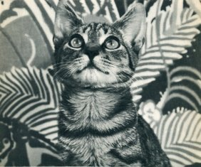 Campbell, Estelle - Cat