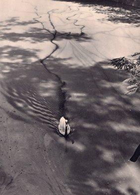 Seidenstucker - Swan